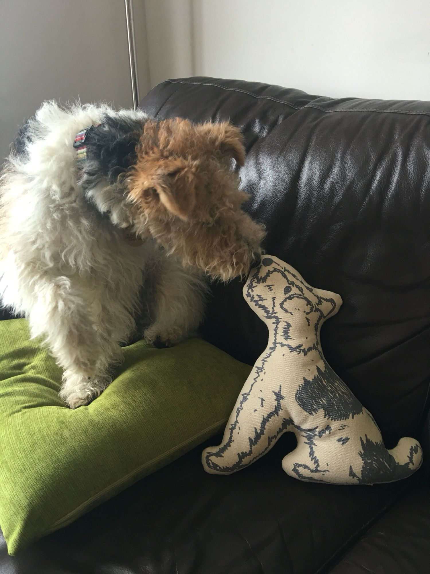 Pip and 'Bertie' the cushion