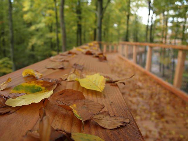 Baumwipfelpfad im Herbst #Baumwipfelpfad #Steigerwald #BaySF #Staatsforsten #Wald #Staatswald #Ebrach #Oberfranken #Baum #Bäume