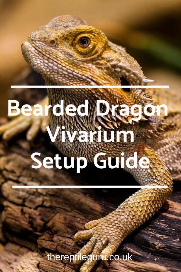 Setting Up A New Bearded Dragon Vivarium Read Our Bearded Dragon