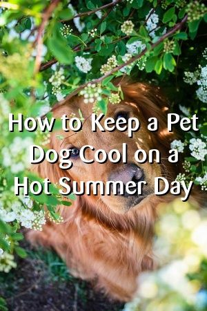 Felicity Mackay Tells About How to Keep a Pet Dog Cool on a Hot Summer Day  #hunde  #Dogbreeds  #cutedogs  #Daschund #JackRussel  #pets #dognames  #recipes