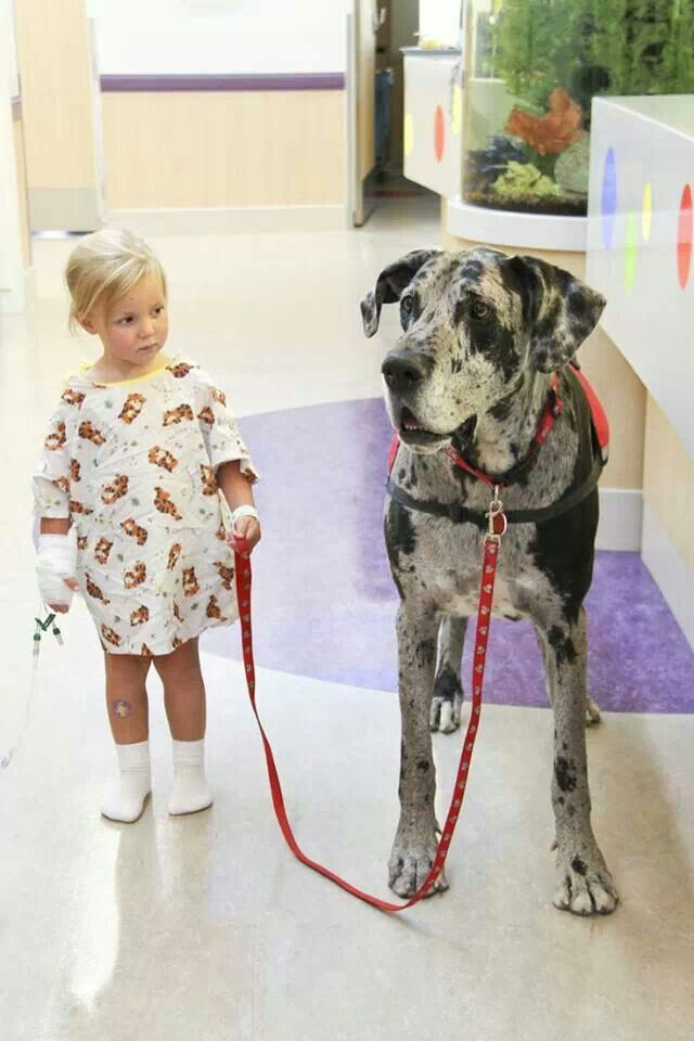 Do Great Dane Dogs Bark A Lot