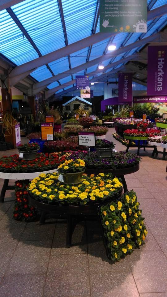 Great Colour Horkans Castlebar Garden Center Garden Castlebar