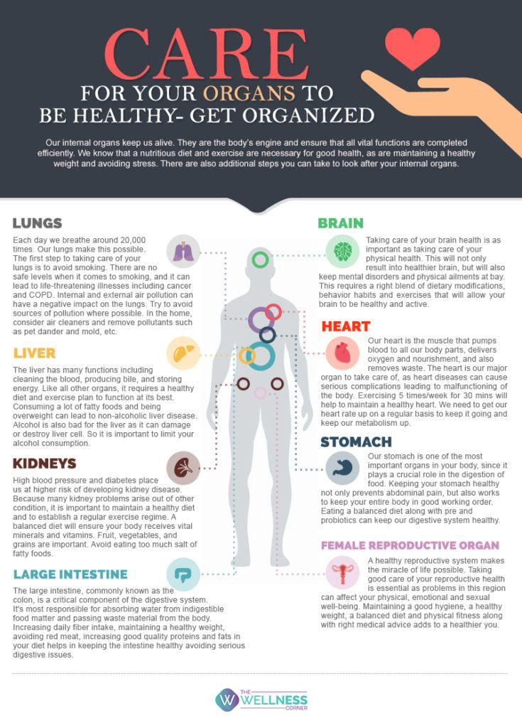 Care For Your Organs To Be Healthy- Get Organised | Health ...