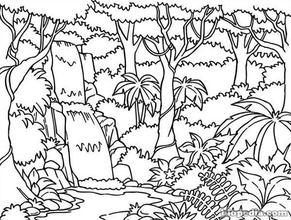 Resultat Dimatges De Dibujo De La Selva Tropical Para Colorear
