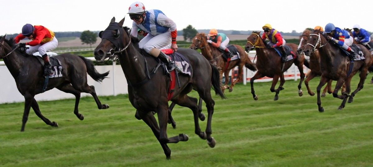 Horse betting tips applying lomachenko salido betting calculator