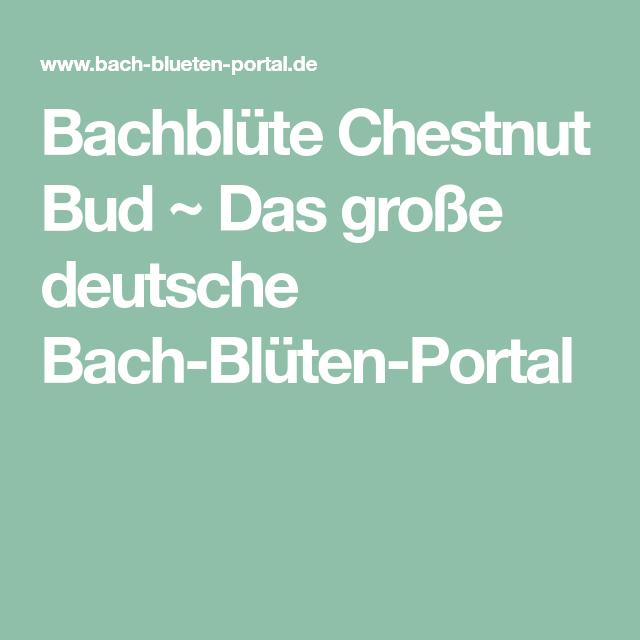 Bachblüte Chestnut Bud ~ Das große deutsche Bach-Blüten-Portal ...