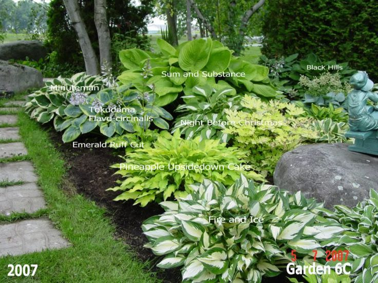 Beautiful Hosta Garden Lots Of Photos With Names Of The Plants On