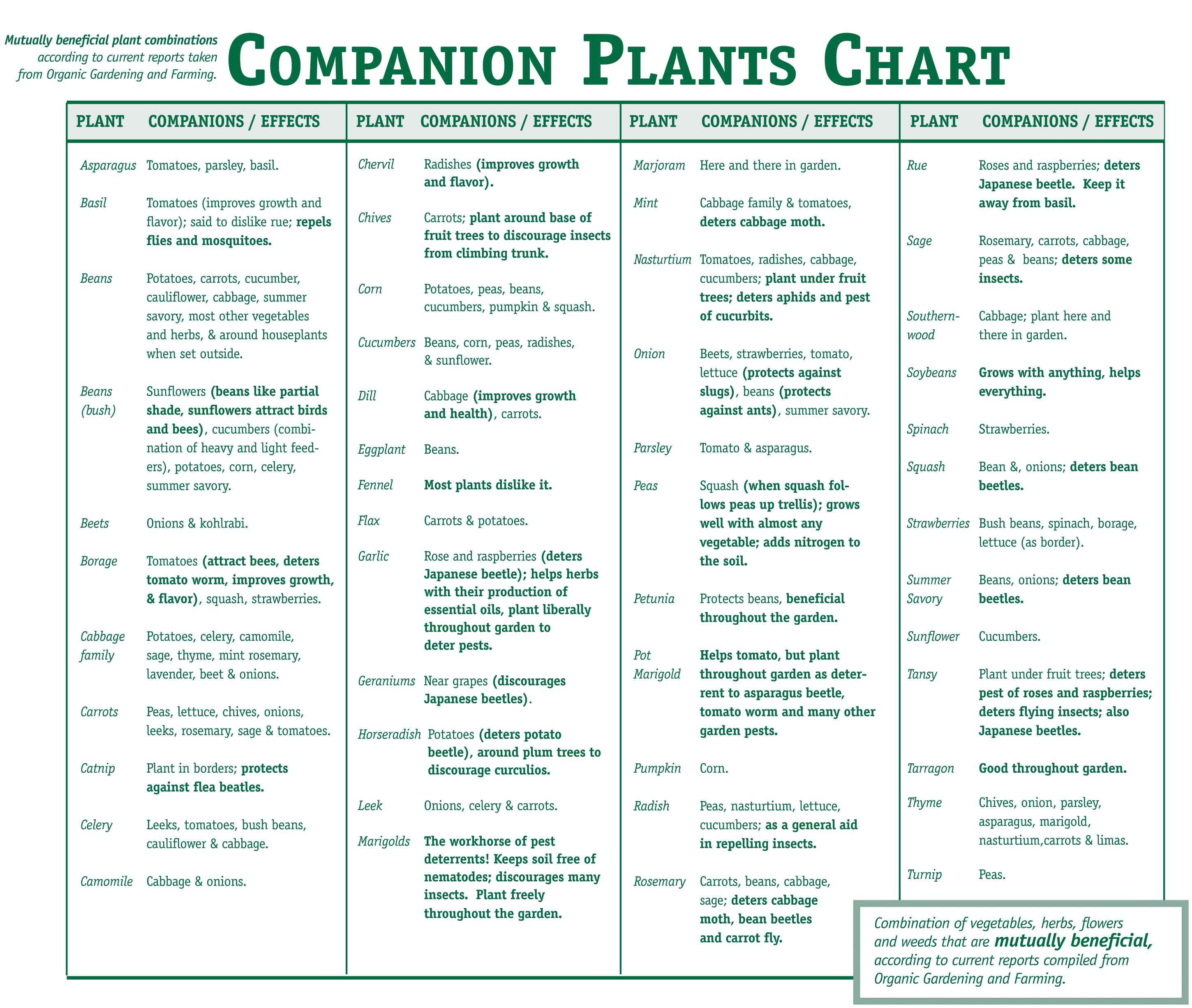 Companion Plants Chart  This Is A Must For Any Organic Gardener.we Have  Been Companion Planting For 30 Yrs (we Were Organic Before Organic Was The  Cool Way ...