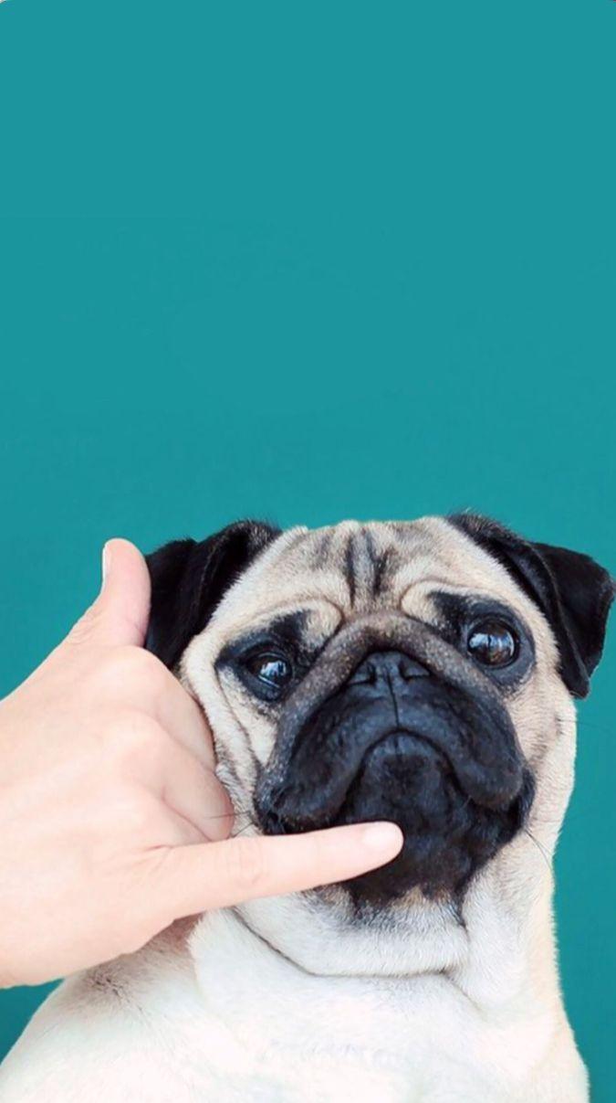 С нетерпением жду твоего звонка 癒 pinterest wallpaper animal