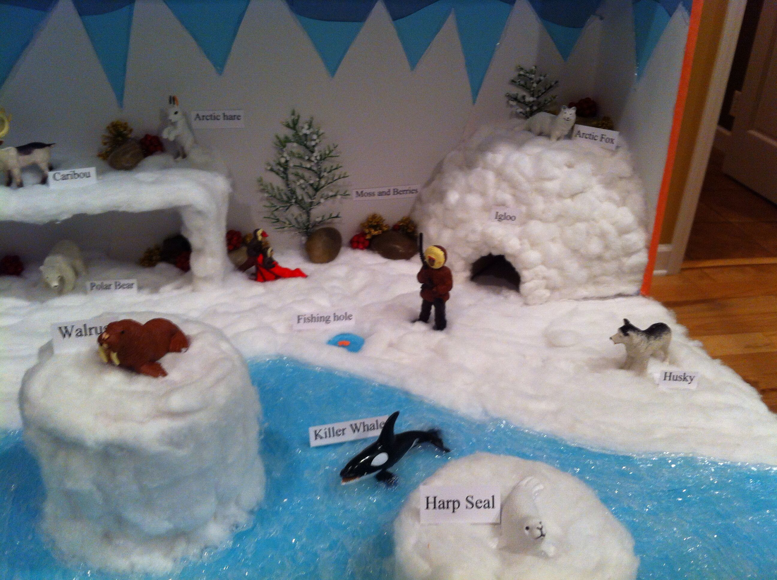 arctic tundra diorama science pinterest arctic tundra dioramas and biomes. Black Bedroom Furniture Sets. Home Design Ideas