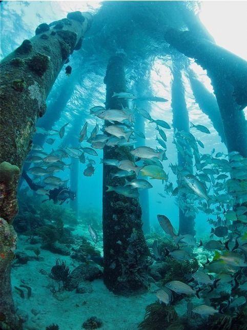 Underwater World, Diving, Bonaire