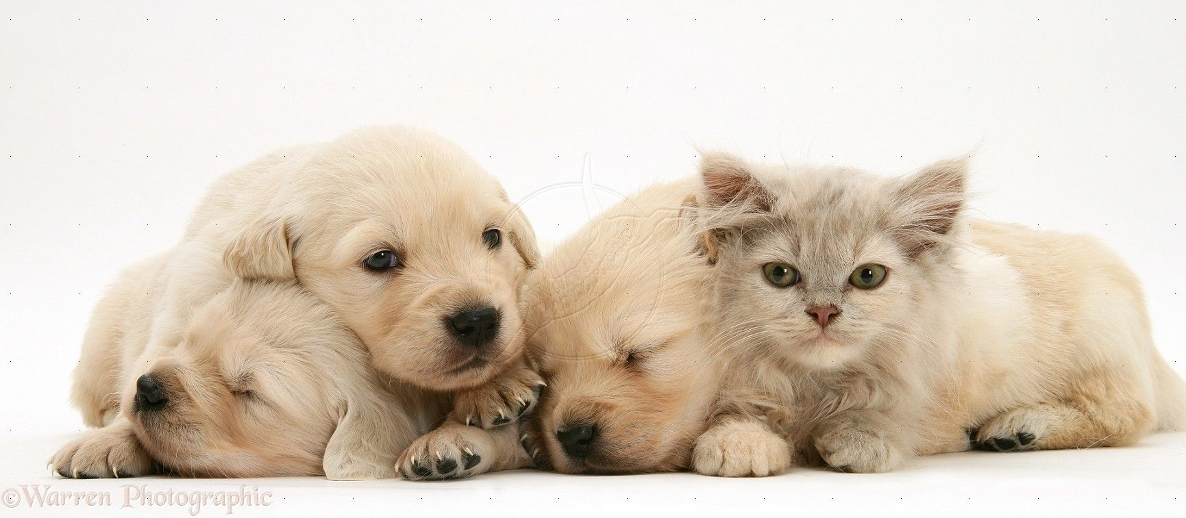 Happy Kitten Morning Cute Puppies And Kittens Free Kindle Books