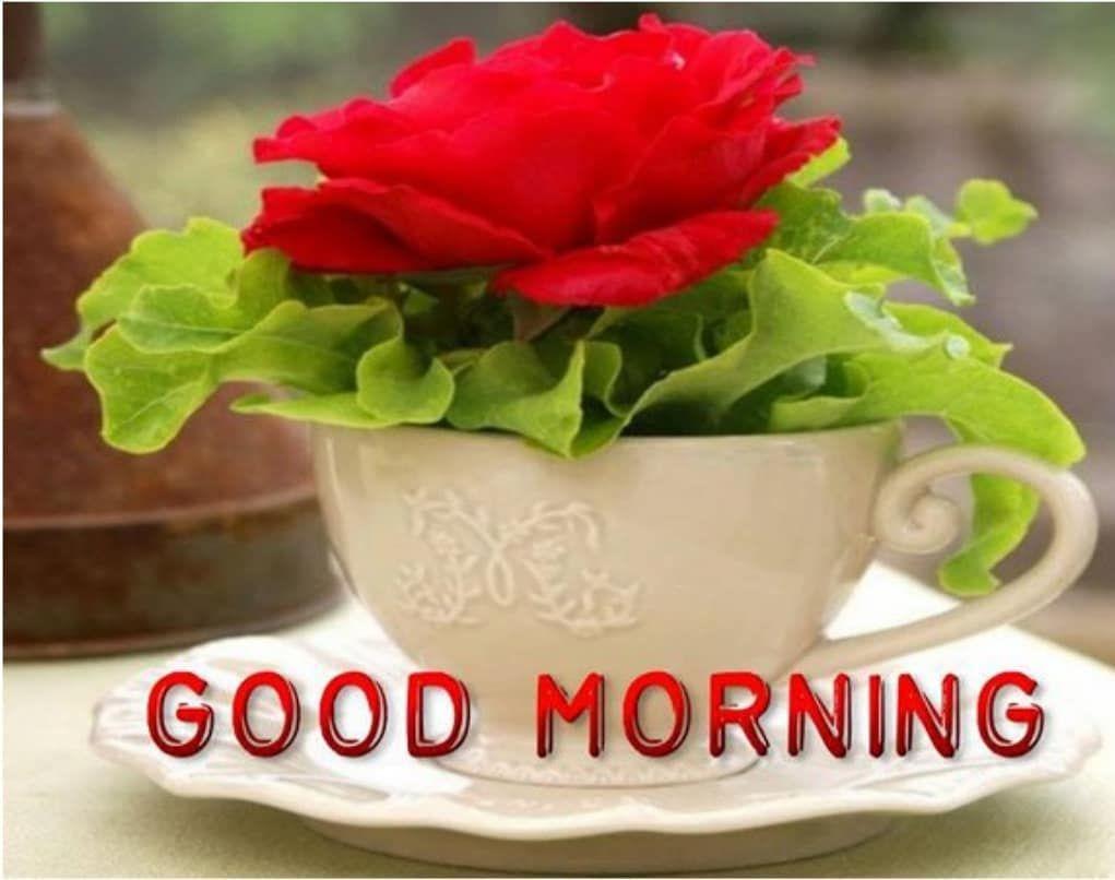 Beautiful Wallpaper Beautiful Good Morning Images Hd 1080p Download
