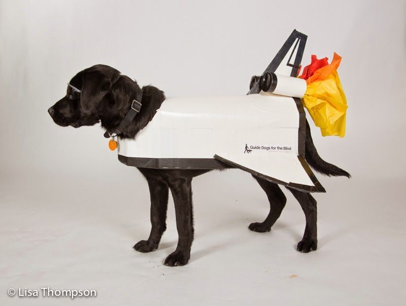 Halloween Costume Contest Goes To The Dogs Dog Halloween Dog