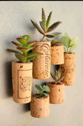 Plantitas en corchos de reciclaje