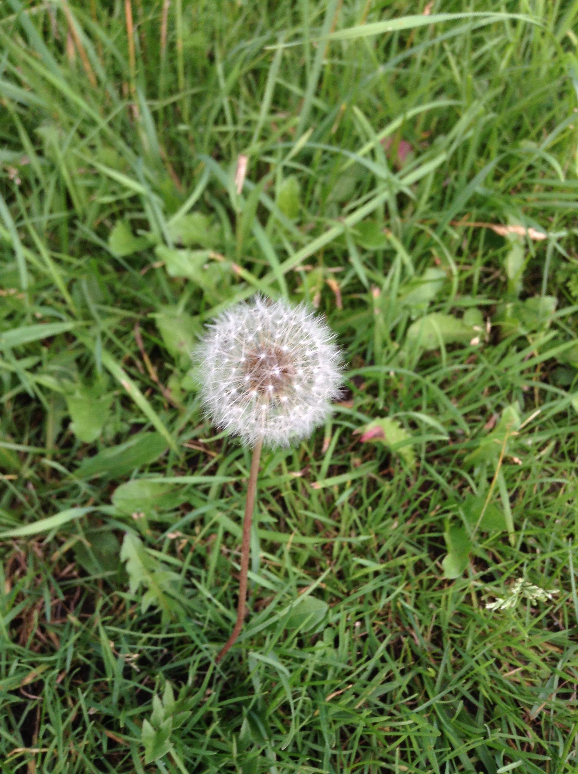 Make a wish, DREAM BIG!!!