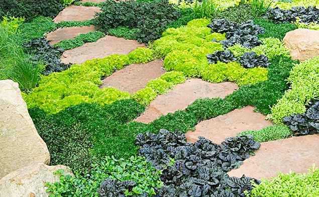 8 plantes couvre sol pour petits jardins jardinage pinterest plantes couvre sol couvre. Black Bedroom Furniture Sets. Home Design Ideas