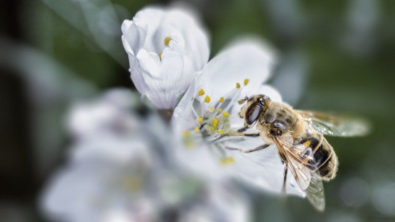 Search Bee Free Photos Stock Images Visual Hunt Photo