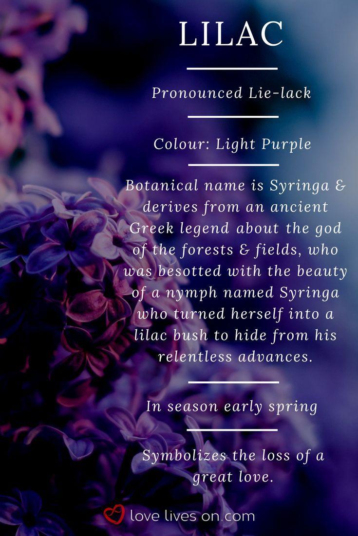 Pin On Flowers Language