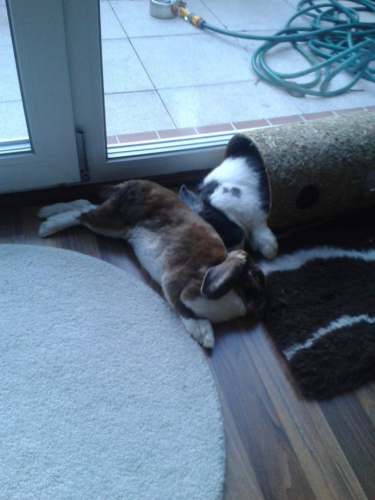 kaninchenstall selber bauen bauanleitung f r die wohnung mimi kaninchenstall kaninchen i. Black Bedroom Furniture Sets. Home Design Ideas