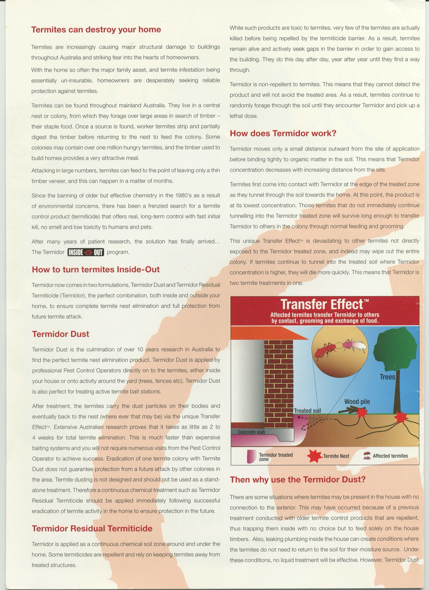 Termites Can Destroy Your Home Termites Pest Control Canning