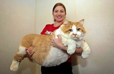 I've never seen such a big cat in my life :)