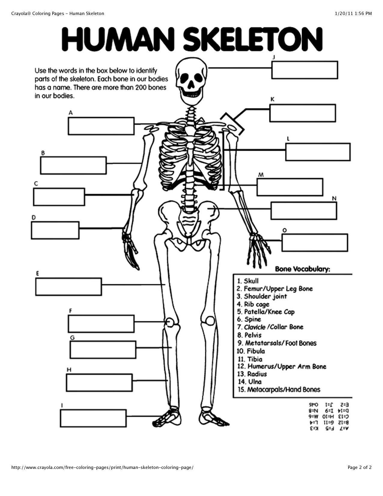 Skeletal System Coloring Pages Human Anatomy For Beginners