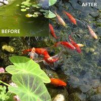 Oxygenator Fish Ponds Plants Landscaping Near Me 400 x 300