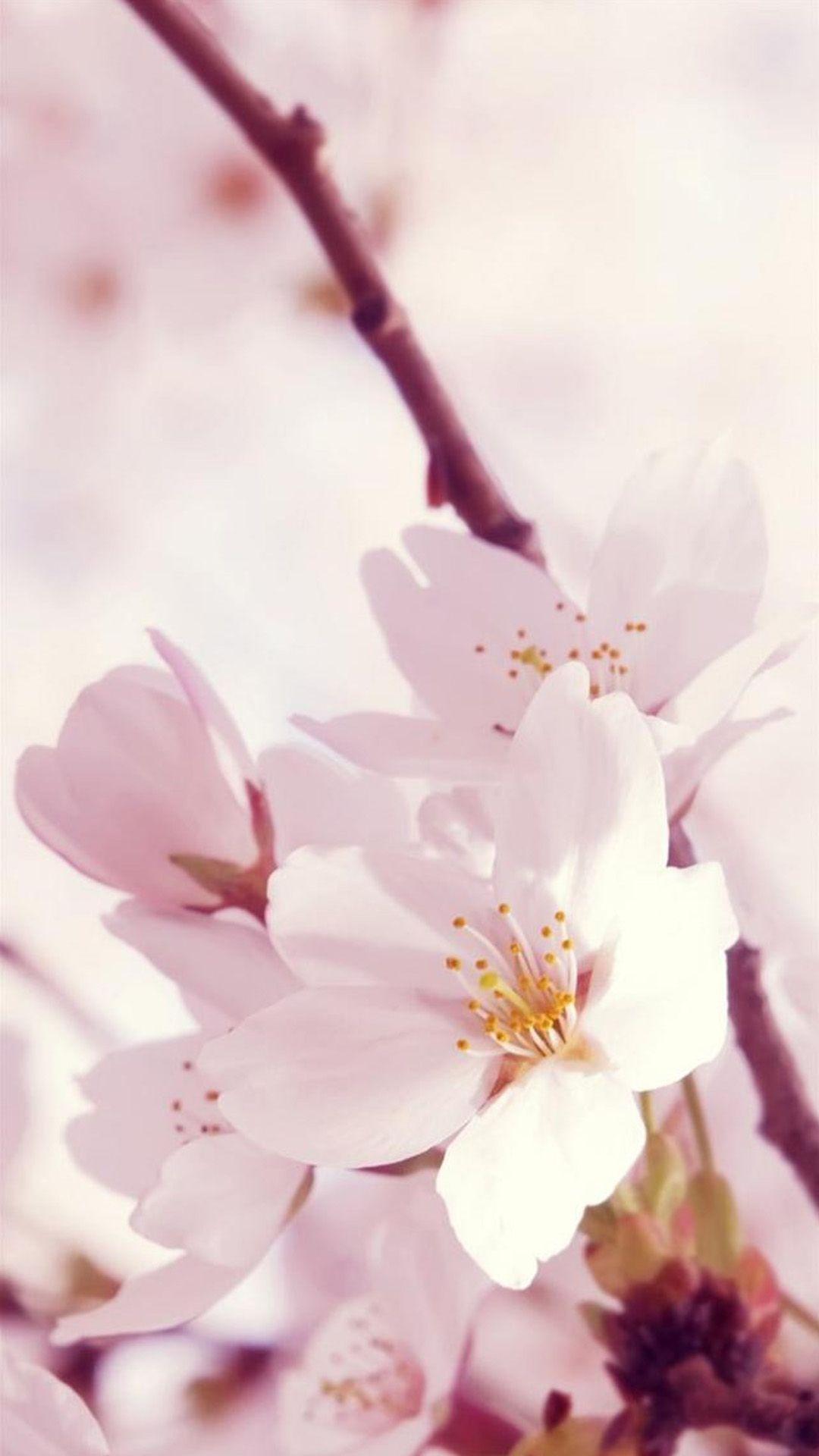 Nature Sunshine Bright Flower Bunch iPhone 6 plus