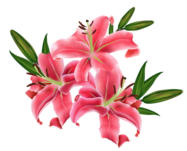 Red Lilium PNG Clipart Picture