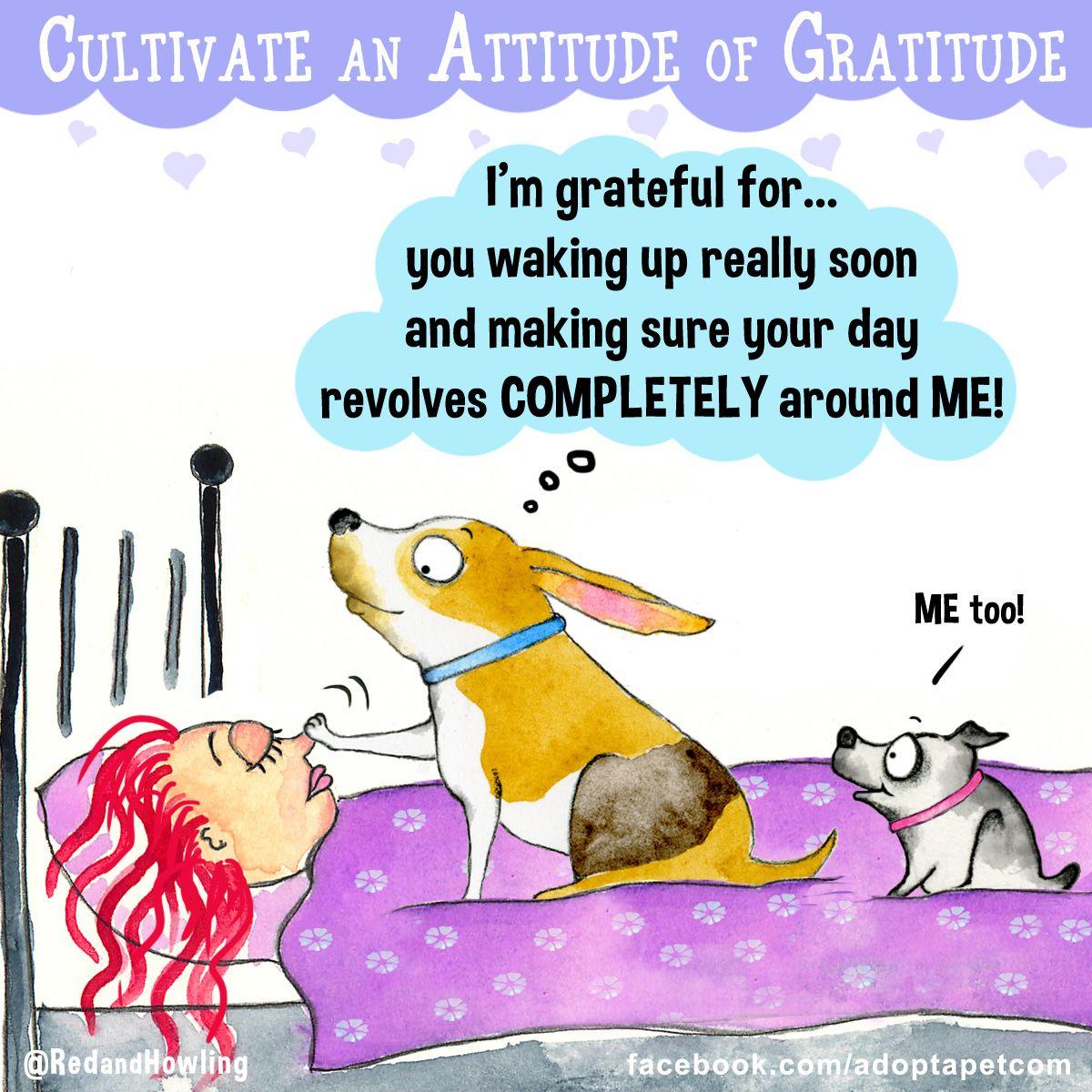 Funny Dog Cartoon Dumb And Dumber Puppy Training Funny Animals