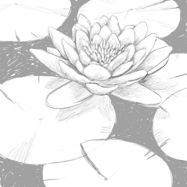 how to draw a water lily leaf