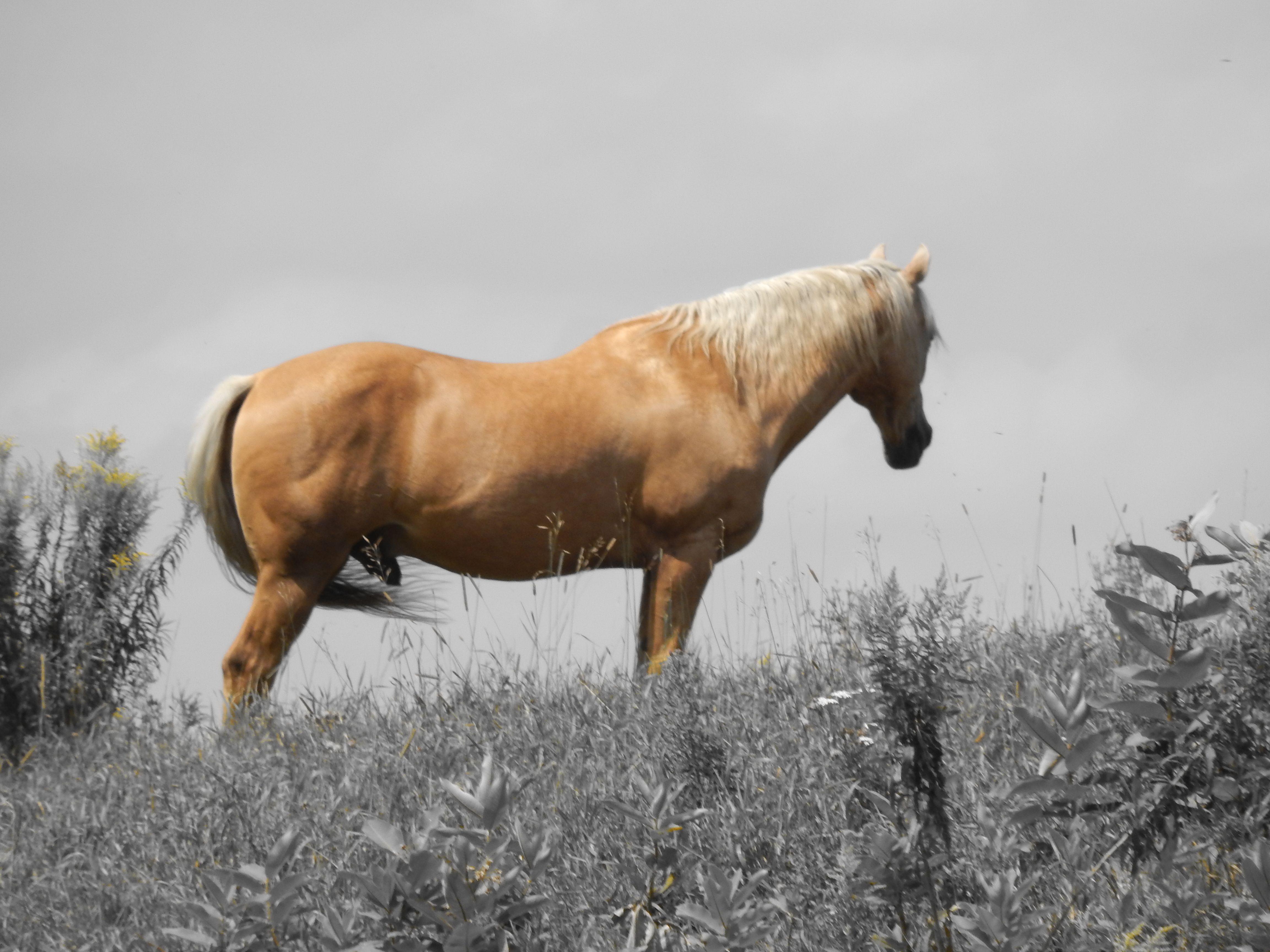 Buster Quater-Horse Registred <3