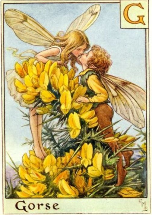 Flowerfairy Alphabet Cicely Mary Barker Flower Fairies Fairy Art