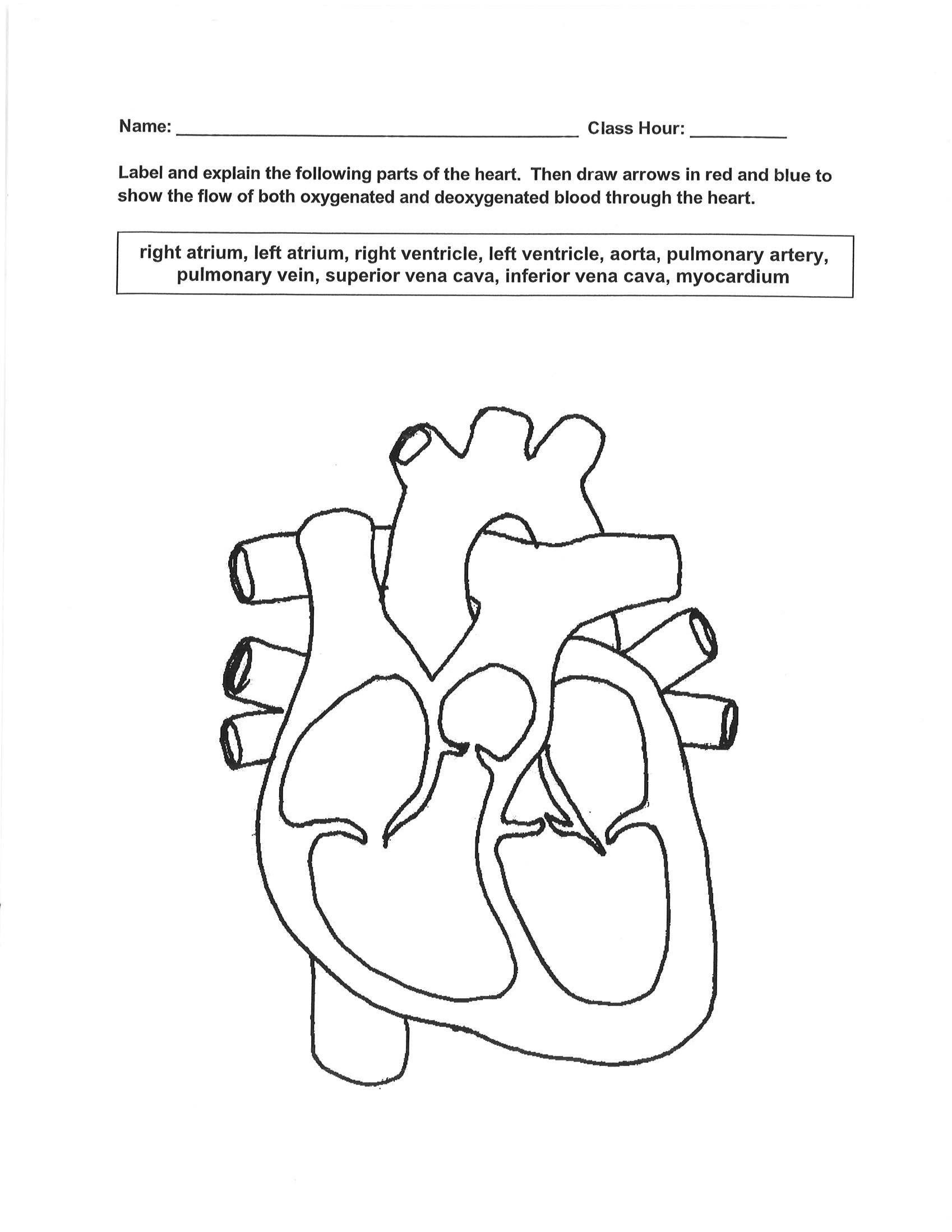 Readablelinear Circulatory System Worksheet