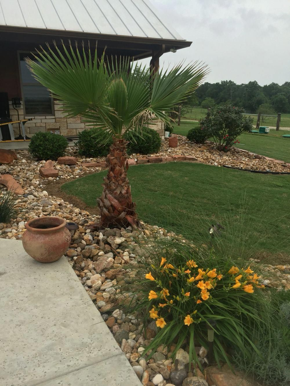 Palm tree and River rock landscaping #riverrocklandscaping