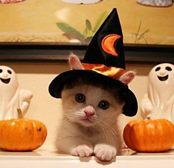 halloween ideas - Google Search ANIMALS are amazing Pinterest - cute cat halloween costume ideas