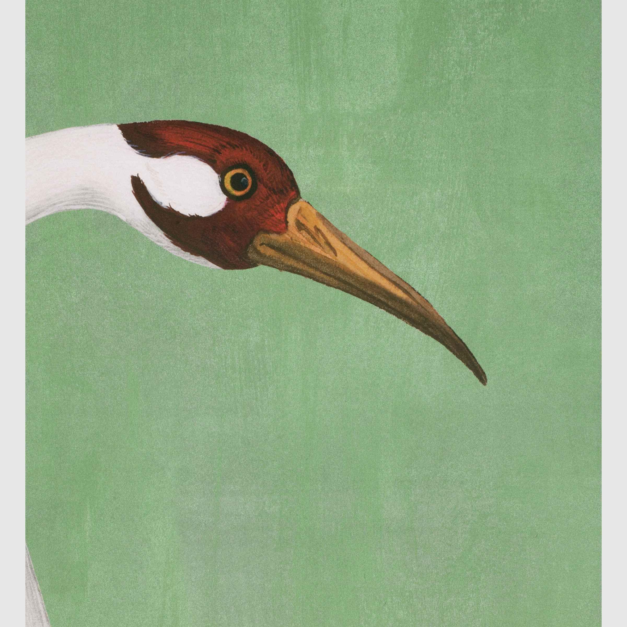 Shop the Green Heron Print Wallpaper at Enjoy