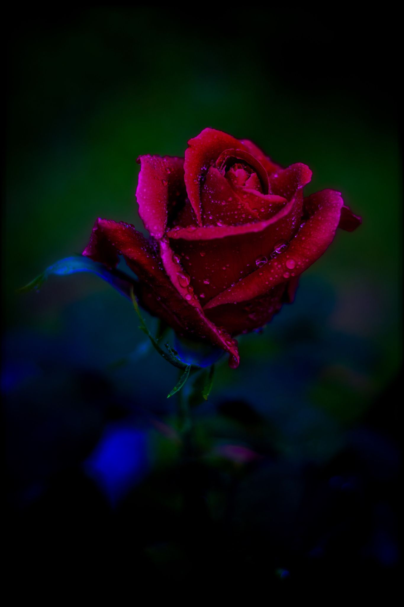 Pin by draguca on roses pinterest beautiful flowers and flowers the age of infinity beauty the age of infinity beauty izmirmasajfo
