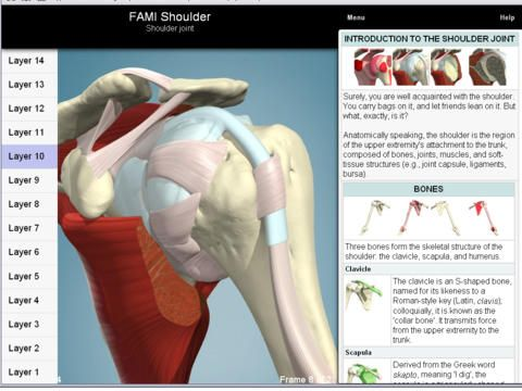 Functional Anatomy for Movement and Injuries: Shoulder by Primal ...