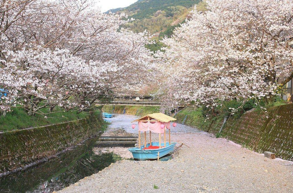Cherry Blossom At Night Japan Tokyo Japan Cherry Blossom Japan