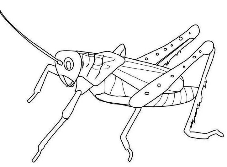 Pin on Insect Coloring Pages