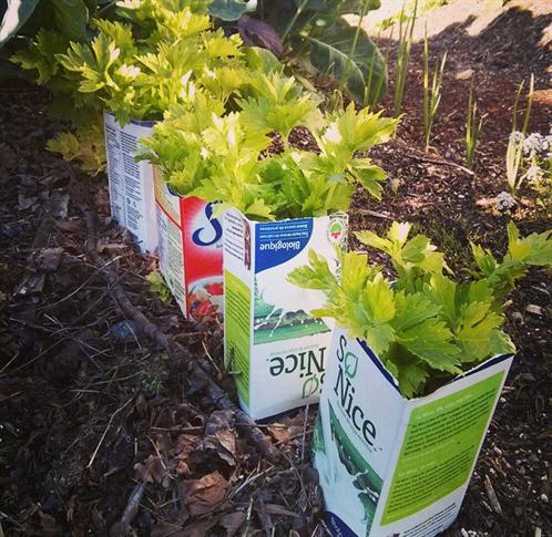 10 ingenious gardening tricks | Gardens Veggies and Annuals