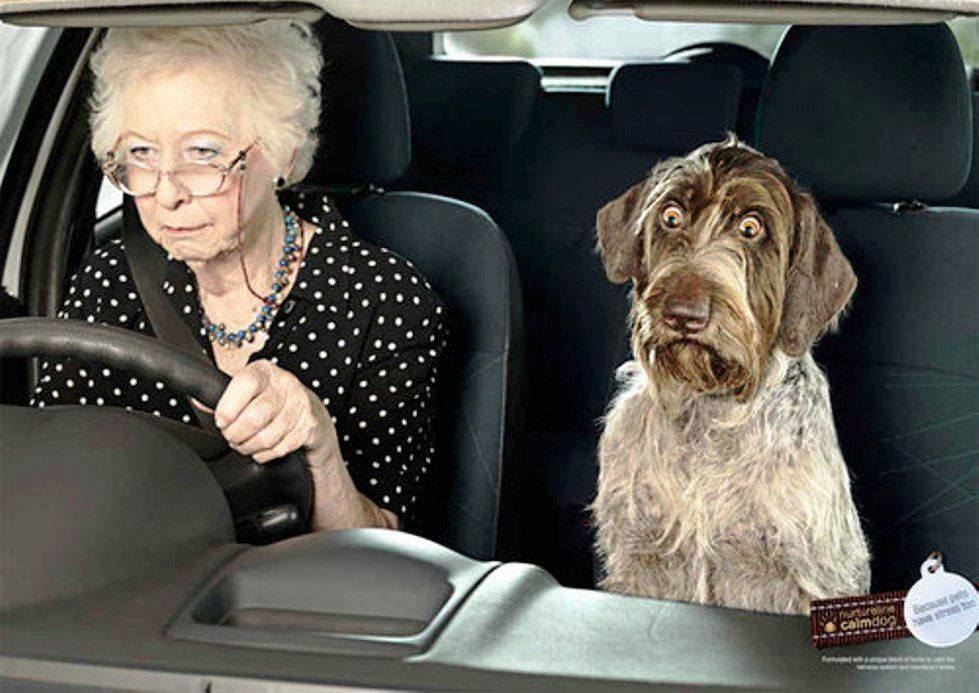 Picture Woman Dog Driving Car