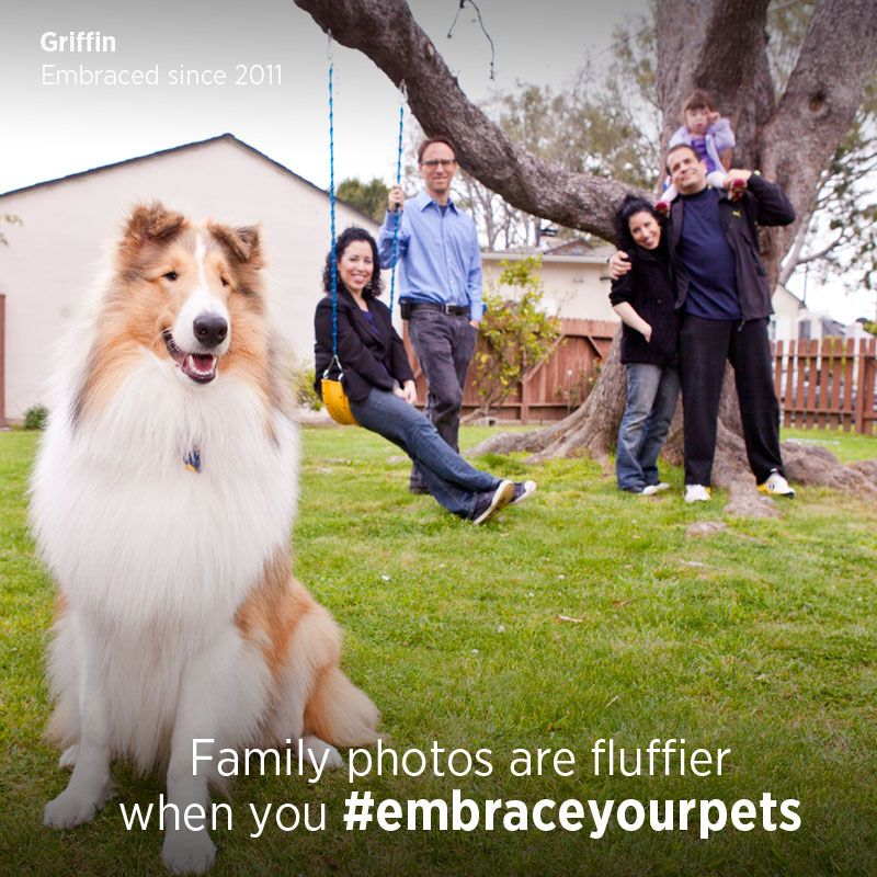 What happens when you EmbraceYourPets? Pet insurance