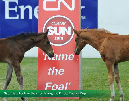 Foals in the ring during the Direct Energy Cup, 2012 Canada One #foals