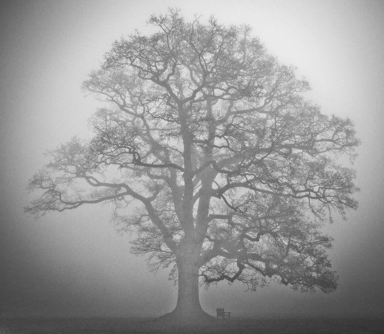 tree in smoke