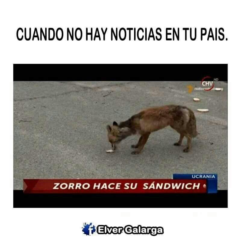 Pin De Ktmport En Notilocas Zorro Atropellados