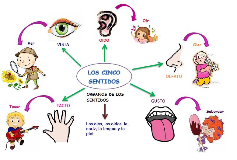 Lo S Organos De Los Sentidos Colorear Imagui Giza Material Comics