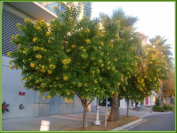 Small Flowering Trees For Southern California Landscaping
